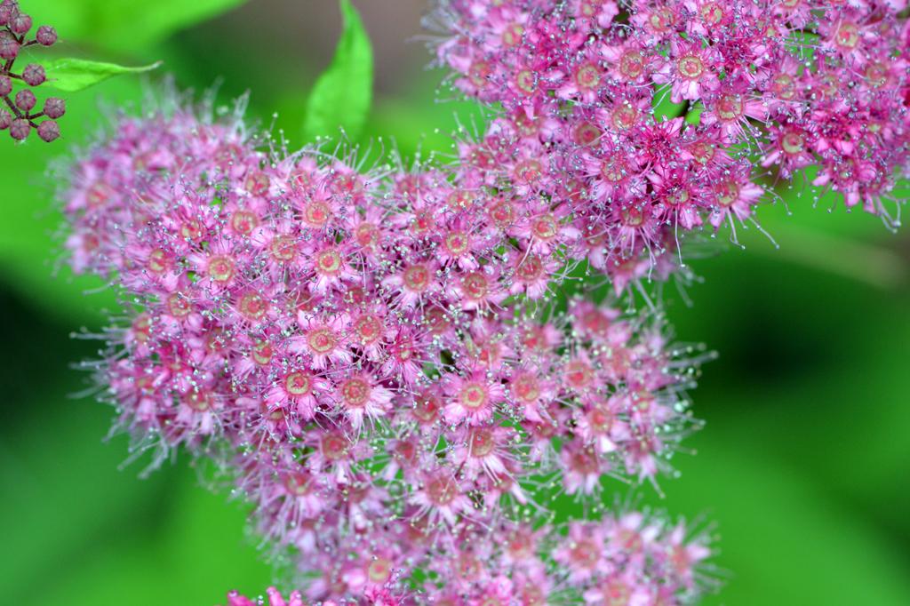 T_pinkgreen